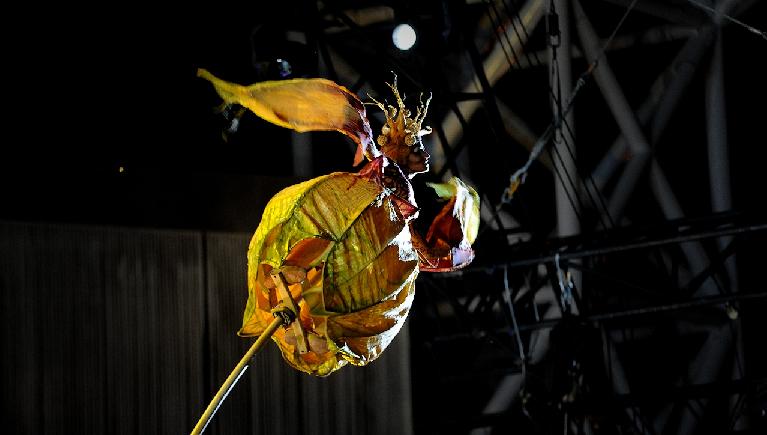 fiore cirque